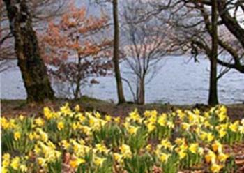 wordsworth and nature asthe daffodils essay The daffodils by william wordsworth prompt in a well-organized essay uses aspects of nature such as the daffodils.
