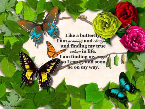 Butterfly cinquain