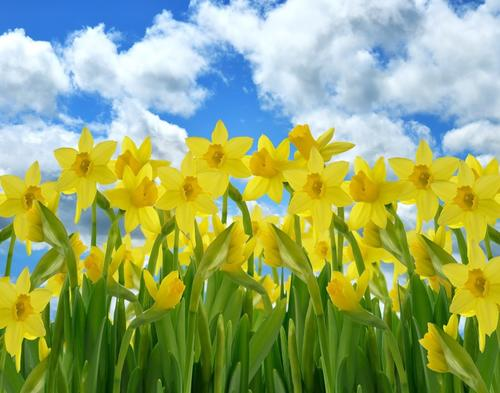 Spring Has Sprung A Poem By Bettyharpbutler All Poetry