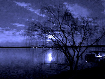 The Wind The Willow And The Moonlight A Poem By Dawn3