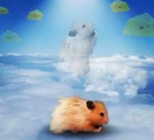 Hampster Heaven A Poem By Adrian41062 All Poetry