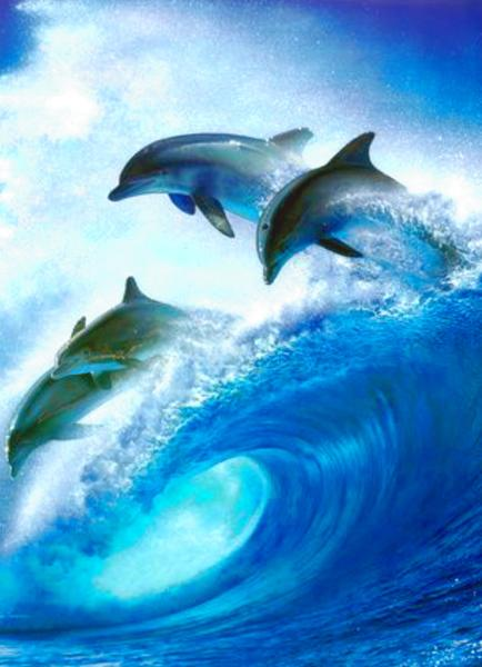 Dolphins Poems - Modern Award-winning Dolphins Poetry ...