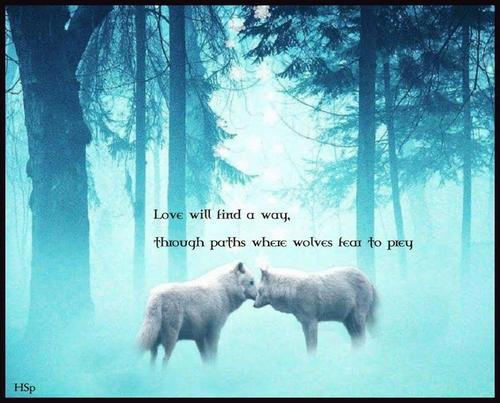 Wolves Love Is Showing A Poem By Littledeer All Poetry